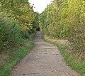 Autumn along the Rutland Water Circular Route - geograph.org.uk - 1011505.jpg