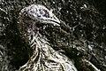Avian influenza roee shpernik 04.jpg
