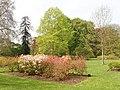 Azaleas at Kew Gardens - geograph.org.uk - 166651.jpg