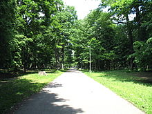 Kauno ąžuolynas (c) Wikipedia