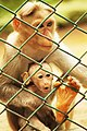 Baby Monkey Behind net.jpg