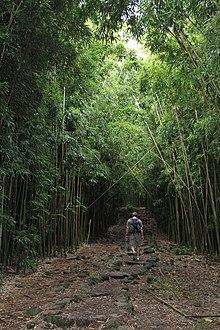 Michael And Sons >> Pipiwai Trail - Wikipedia