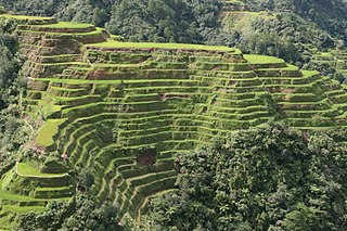Banaue Rice Terraces rice terraces in the Cordillera region, Philippines
