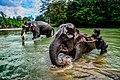 Bathing The Elephant.jpg
