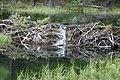 Beaver ponds Kananaskis Alberta Canada (26589259893).jpg
