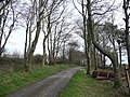 Beeches by the T junction - geograph.org.uk - 715132.jpg