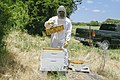 Beekeeping in a bee suit while holding a honeycomb from a beehive.jpg