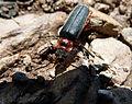Beetle (7338233496).jpg