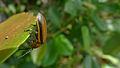Beetle lateral (16530001703).jpg