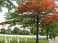 Begyndende efterår på 'Den Amerikanske kirkegård' - panoramio.jpg