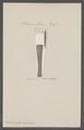 Belemnites hastatus - - Print - Iconographia Zoologica - Special Collections University of Amsterdam - UBAINV0274 090 08 0020.tif