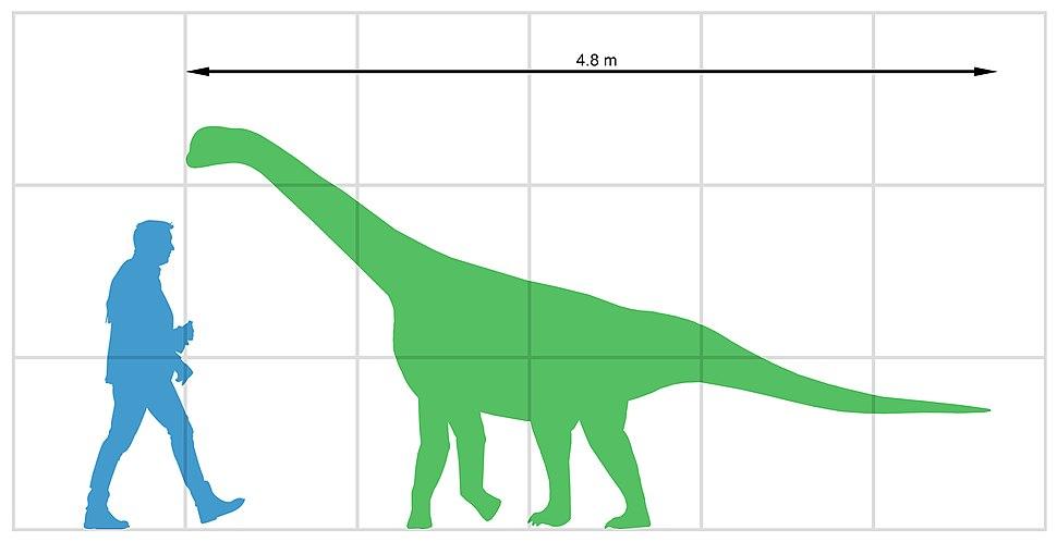 Bellusaurus sui size
