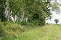 Belt of trees beside farm track (2) - geograph.org.uk - 1348592.jpg