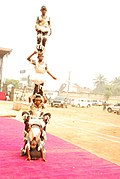 Benue community in Nimo cultural dancing troupe.jpg