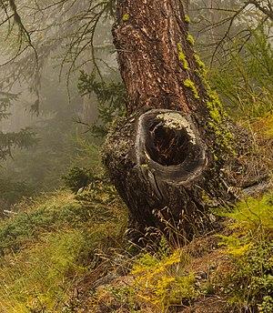 Bergtocht van Vens naar Bettex in Valle d'Aosta (Italië) 012.jpg