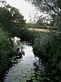 Bevern Stream - geograph.org.uk - 1398177.jpg