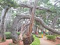 Big Banyan Tree 01.jpg