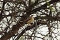 Bird Botswana 03.jpg