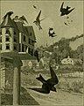 Bird lore (1905) (14749375952).jpg