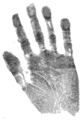 Birdice Blye-Richardson handprint.png