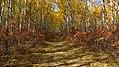 Birds Hill Provincial Park, Manitoba (481668) (9445230309).jpg