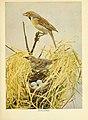 Birds of lakeside and prairie (6256986695).jpg