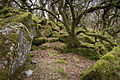 Black-a-Tor Copse - Dartmoor - South Devon, England.jpg
