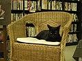 Black cat at Smallidea.jpg