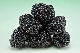 Blackberries (Rubus fruticosus).jpg