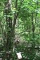 Blck Walnut 20-05-31 012.jpg