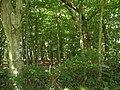 Block of woodland behind Ty'n Llwyn - geograph.org.uk - 893453.jpg