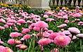 Blumen am Schloß.jpg