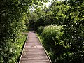 Boardwalk, Slapton Ley National Nature Reserve - geograph.org.uk - 1362700.jpg