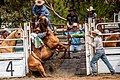Boddington Rodeo 2015 (128247337).jpeg