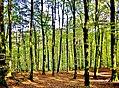 Bois de Bonneval.jpg