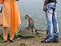 Bonnet Macaques Macaca radiata Kanheri SGNP Mumbai by Raju Kasambe DSCF0056 (1) 05.jpg