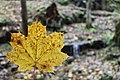 Borjomi Kharagauli National Park (6).jpg