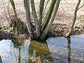 Bornem Barelstraat Knotbomen en hakhout vlasrootput (5) - 193362 - onroerenderfgoed.jpg