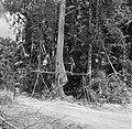Boslandcreolen bezig met het omzagen van een boom, Bestanddeelnr 252-4878.jpg