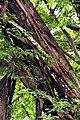 Botanic garden limbe100.jpg