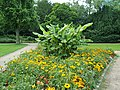 Botanischer Sondergarten Wandsbek Winterharte Banane (2).jpg