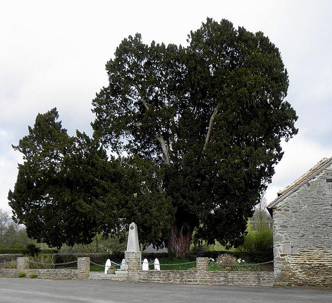 If près du monument aux morts de Boulay-les-Ifs (53).