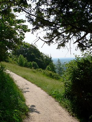 Box Hill, Surrey - North Downs Way approaching the Salomons Memorial through trees.