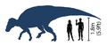 Brachylophosaurus scale diagram.png