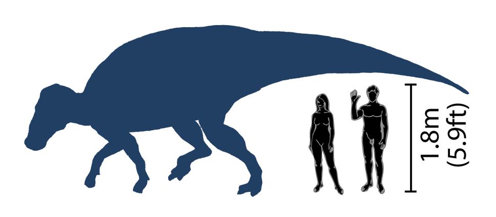 Brachylophosaurus scale diagram