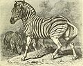 Brehms Tierleben; allgemeine kunde des thierreichs. Mit 1910 abbildungen im text, 11 karten und 180 tafeln in farbendruck und holzschnitt. (1893) (19792129163).jpg