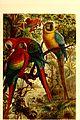 Brehms Tierleben - allgemeine Kunde des Tierreichs - mit 1800 Abbildungen im Text, 9 Karten und 180 Tafeln in Farbendruck und Holzschnitt (1891) (20227846749).jpg