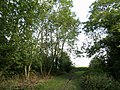 Bridleway north west of Hedon - geograph.org.uk - 566035.jpg