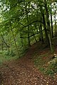 Bridleway through Climperwell Wood - geograph.org.uk - 585728.jpg