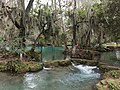 Bromeliáceas en rio Agua Buena - Tamasopo, San Luis Potosí.jpg